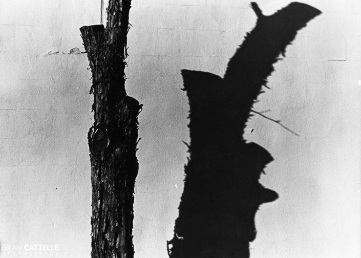 Art Photos Dead Shadow