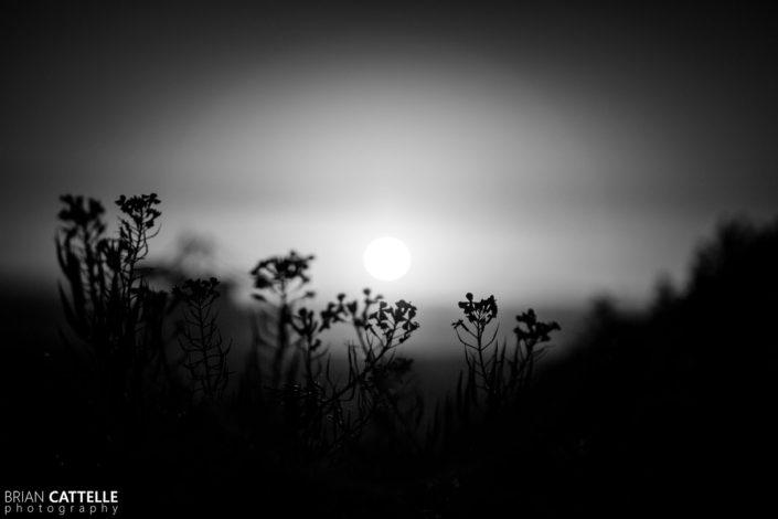 Chil Sunset Study 01