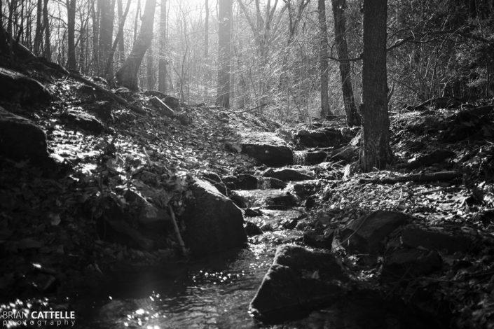 Black and White Art Photos Creek