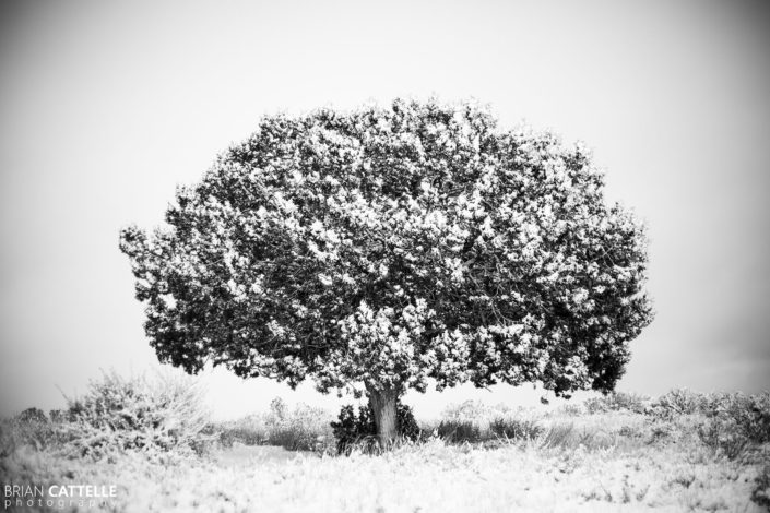 Fine Art Black and White Photography Utah Tree