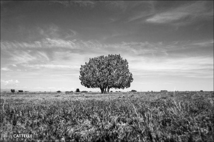 Fine Art Black and White Prints Tree