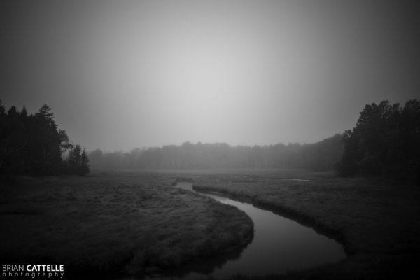 Nature Photography Marsh