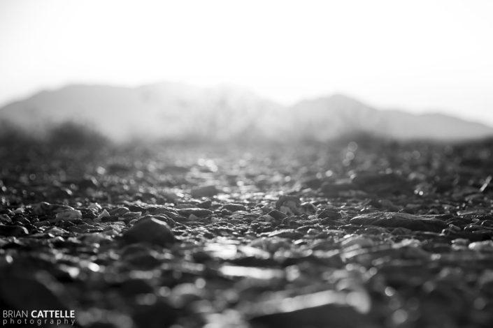 Nature Photography Sonora Desert