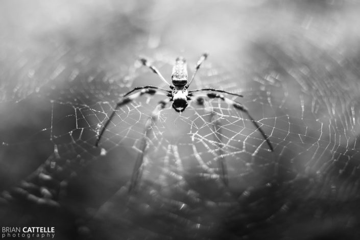 Nature Photography Spider