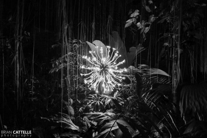 Photography Atlanta Botanical Garden